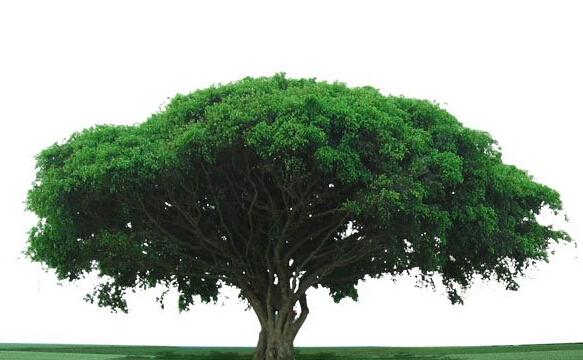 风景假树_摄影树风景作品_风景速写树