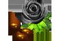 1颗黑玫瑰种子